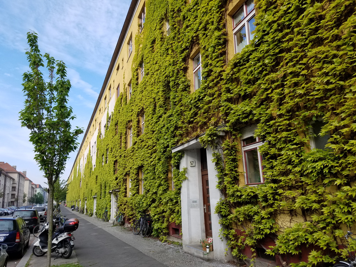 Vines grow on the wall of a building in Prenzlauer Berg